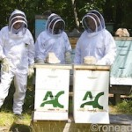 How sweet it is: A day in the hives of Algonquin College (short video)